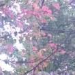 日々、秋らしく ・ ・ ・