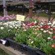 多部田町森谷園芸さんに行きました。