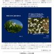妹尾の日記と新渡戸稲造