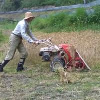 麦刈りしました。