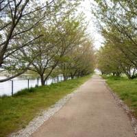 奈良田原本町の唐古鍵遺跡公園の整備進行情況