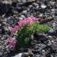 高山植物(山の花)