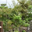 中山道鵜沼宿と犬山成田山四国霊場八十八ヶ所お砂踏み-2
