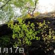 岩古屋山 谷間の樹木