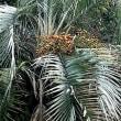 特定保健指導の日!帰路環境センターGGとブラジル椰子の実!