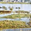 台風後の水無瀬河川敷