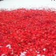 雪の上の落ち葉の絨毯。ハンキング。