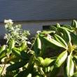 お天気も良いので庭仕事をしています。