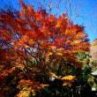 『高麗の色』 神輿殿