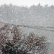 3月21日 雪⁉