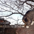 のんちゃんの気ままなポーズ 125-②  木登りの写真を撮らせて