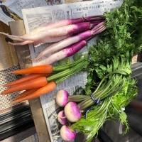 小春日和は、加茂の山中を朝採れの野菜を捜そう!