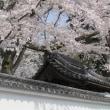 「南禅寺の桜」