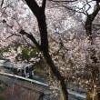 本日の撮影 辰野線は自宅近くの桜と