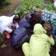 2017年10月21日 里山.com サツマイモ収穫体験 雨天