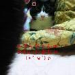 他愛ない日常(11月13日)