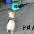 やっと・・・やっとやで(^_-)-☆