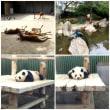 王子動物園に行きました