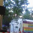 第60回さっぽろライラックまつり終了(川下会場は6月2、3日開催)阿部卓馬さんのステージみてきました♪