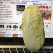 ミニチュア白菜