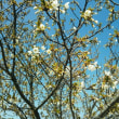 逢妻堤防の桜