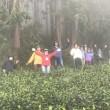 【ご報告】茶摘み・紅茶作り+安倍川源流・安倍の大滝トレッキング