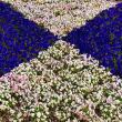 花の砂時計