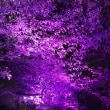 ハロウィン仕様の花の道…(^-^)…そして…