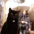 『三月猫の日』