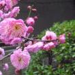 白い花が混じったピンクの花