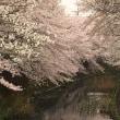 桜さくらサクラ・・・