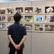動物愛護パネル&ミニ写真展の開催