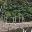 一の俣・桜公園の枯林の池