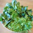 春夏野菜作りの準備作業 第一弾