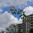 夏雲とセミの鳴き声