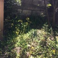 雑草蔓延びる春