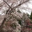 花咲く神宮
