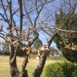 久々に 加納城址 に来ました!桜の蕾も膨らみいつ開こうか⁉️ってところかな〜あすか