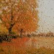 雨の向こうに秋の彩。