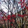 Back to Sapporo・その28「過ぎゆく秋を惜しみつつ」
