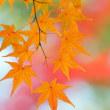 一枝の紅葉