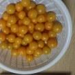 我が庭のミニトマト