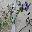 ロウグチと紫蛮刀が美しい7月