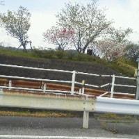 今日は久しぶりに近江八幡へ