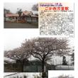花巡り 「桜-その442」 ごか西児童館