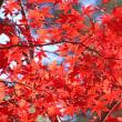 色鮮やかな燃える様な紅葉だった~平林寺
