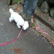 今日は、散歩行けました。