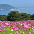 能古島アイランドパークからp6(D810,Nikonマクロ105mm)