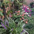 初秋の庭より