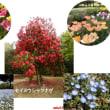 春は花!!!